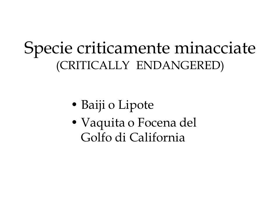Specie criticamente minacciate (CRITICALLY ENDANGERED) Baiji o Lipote Vaquita o Focena del Golfo di California
