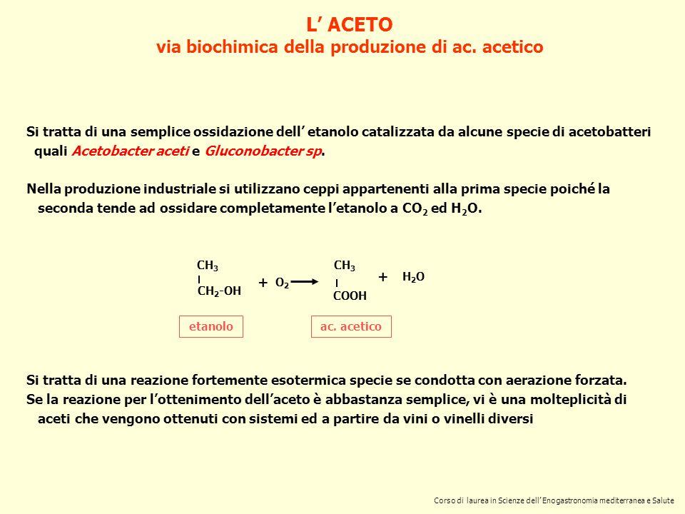 L ACETO via biochimica della produzione di ac. acetico ac. acetico CH 3 CH 2 -OH etanolo + O2O2 CH 3 COOH + H2OH2O Si tratta di una semplice ossidazio