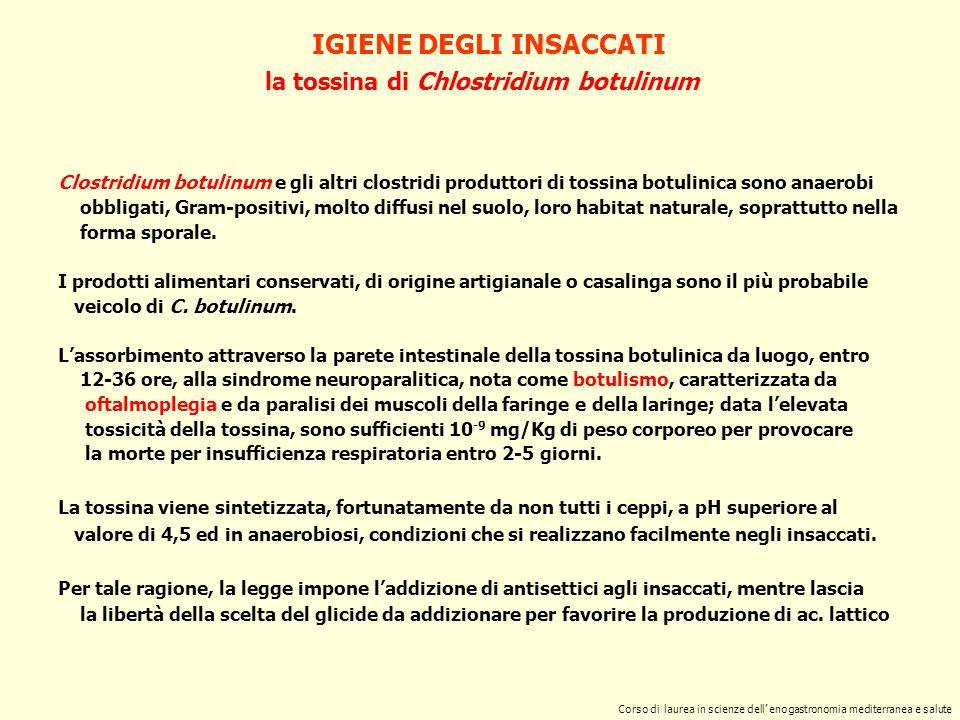 la tossina di Chlostridium perfrigens IGIENE DEGLI INSACCATI Corso di laurea in scienze dell enogastronomia mediterranea e salute Anaerobio sporigeno, Gram-positivo, Cl.