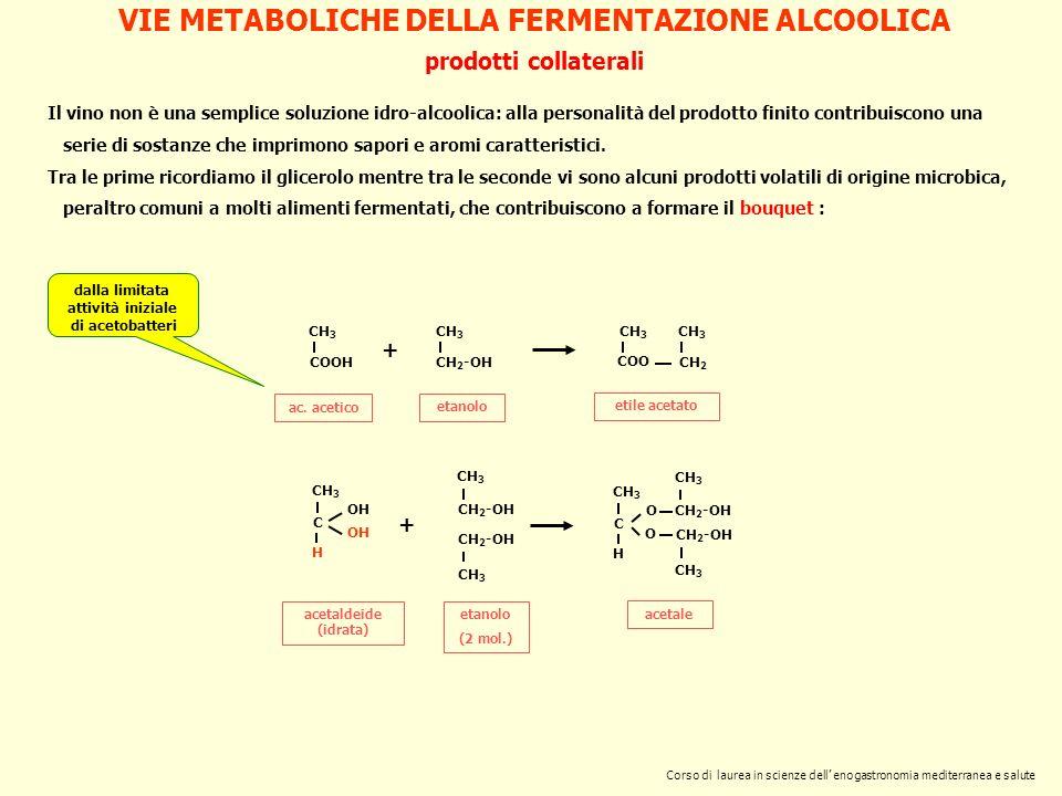 prodotti collaterali CH 3 COOH ac. acetico CH 3 CH 2 -OH etanolo + CH 3 COO CH 3 CH 2 etile acetato CH 3 C H OH acetaldeide (idrata) + CH 3 CH 2 -OH e