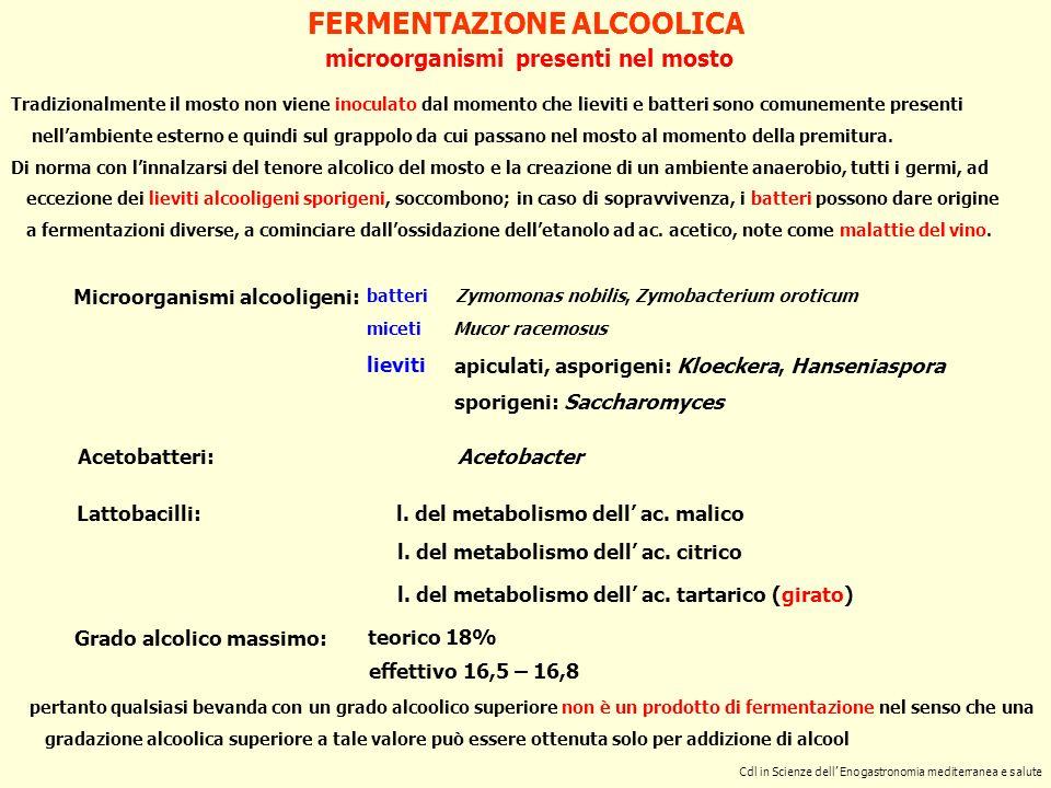 microorganismi presenti nel mosto Cdl in Scienze dell Enogastronomia mediterranea e salute FERMENTAZIONE ALCOOLICA Grado alcolico massimo: teorico 18%