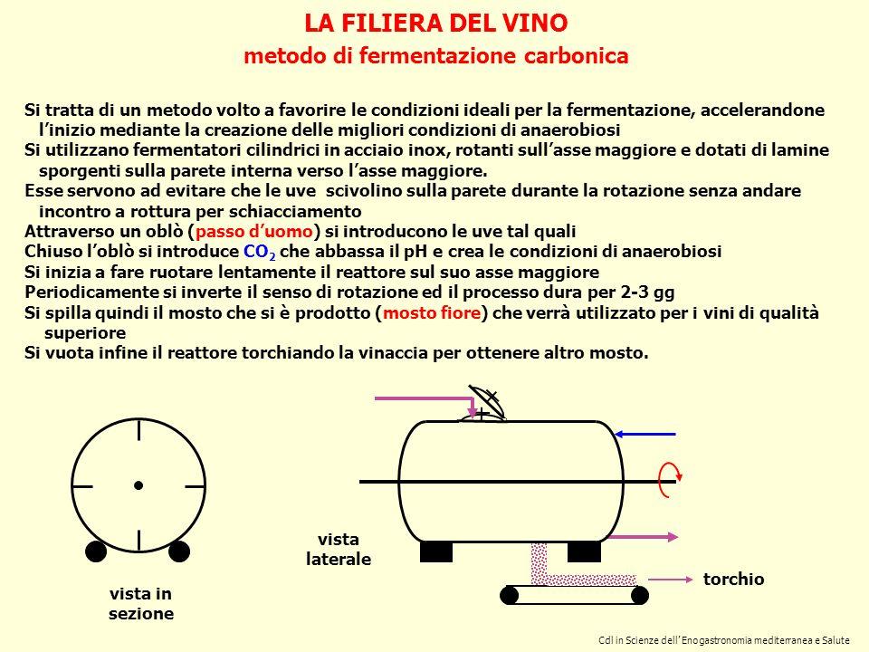 LA FILIERA DEL VINO metodo di fermentazione carbonica Cdl in Scienze dell Enogastronomia mediterranea e Salute Si tratta di un metodo volto a favorire
