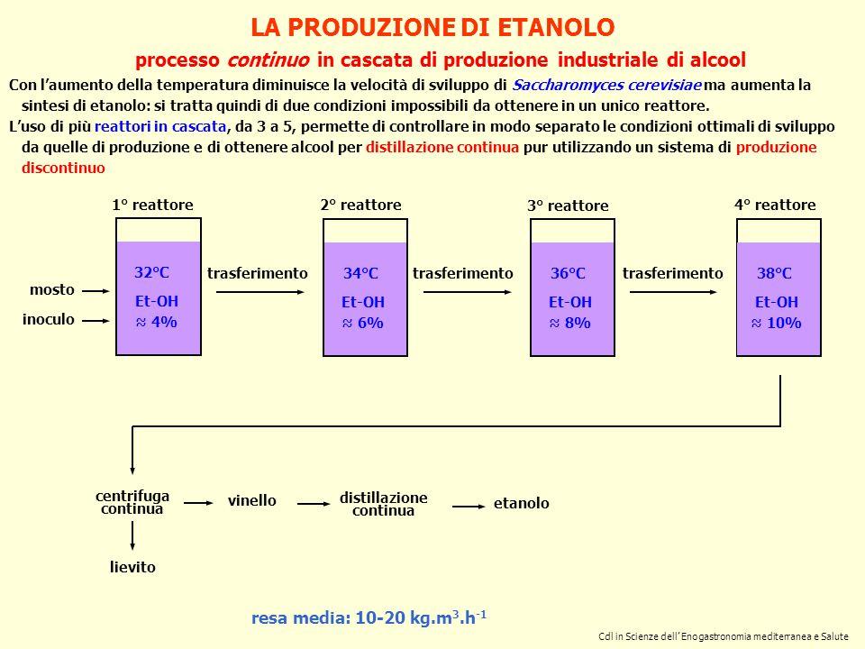 LA PRODUZIONE DI ETANOLO processo continuo in cascata di produzione industriale di alcool resa media: 10-20 kg.m 3.h -1 mosto centrifuga continua vine