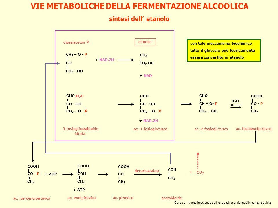 sintesi dell etanolo + NAD.2H etanolo + NAD ac. 3-fosfoglicerico CHO CH - OH CH 2 – O - P 3-fosfogliceraldeide CHO CH - OH CH 2 – O - P.H 2 O idrata +