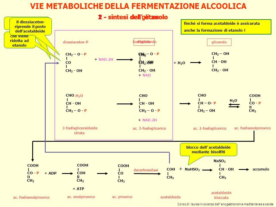 LA PRODUZIONE DI ETANOLO processo industriale batch Melle-Boiton di produzione di alcool Il processo è basato sul riciclo dei lieviti per abbreviare i tempi di produzione dell etanolo mosto inoculo iniziale sviluppo di S.