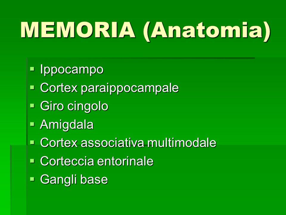 MEMORIA (Anatomia) Ippocampo Ippocampo Cortex paraippocampale Cortex paraippocampale Giro cingolo Giro cingolo Amigdala Amigdala Cortex associativa mu