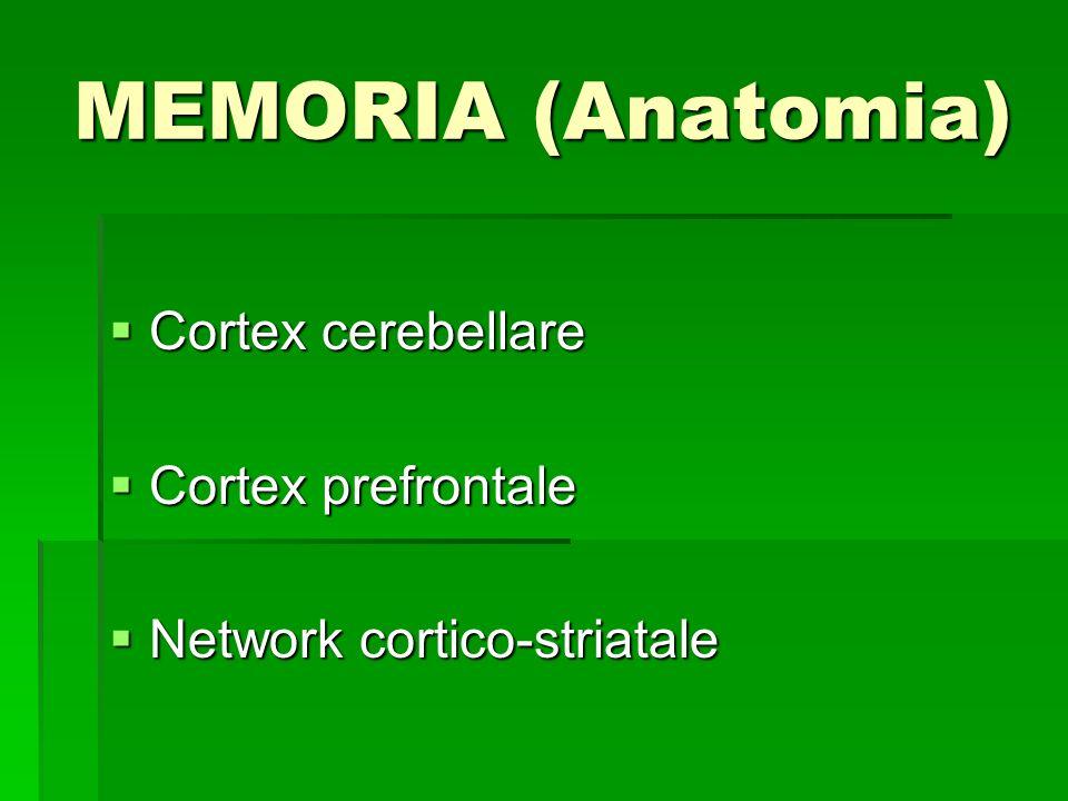 MEMORIA (Anatomia) Cortex cerebellare Cortex cerebellare Cortex prefrontale Cortex prefrontale Network cortico-striatale Network cortico-striatale