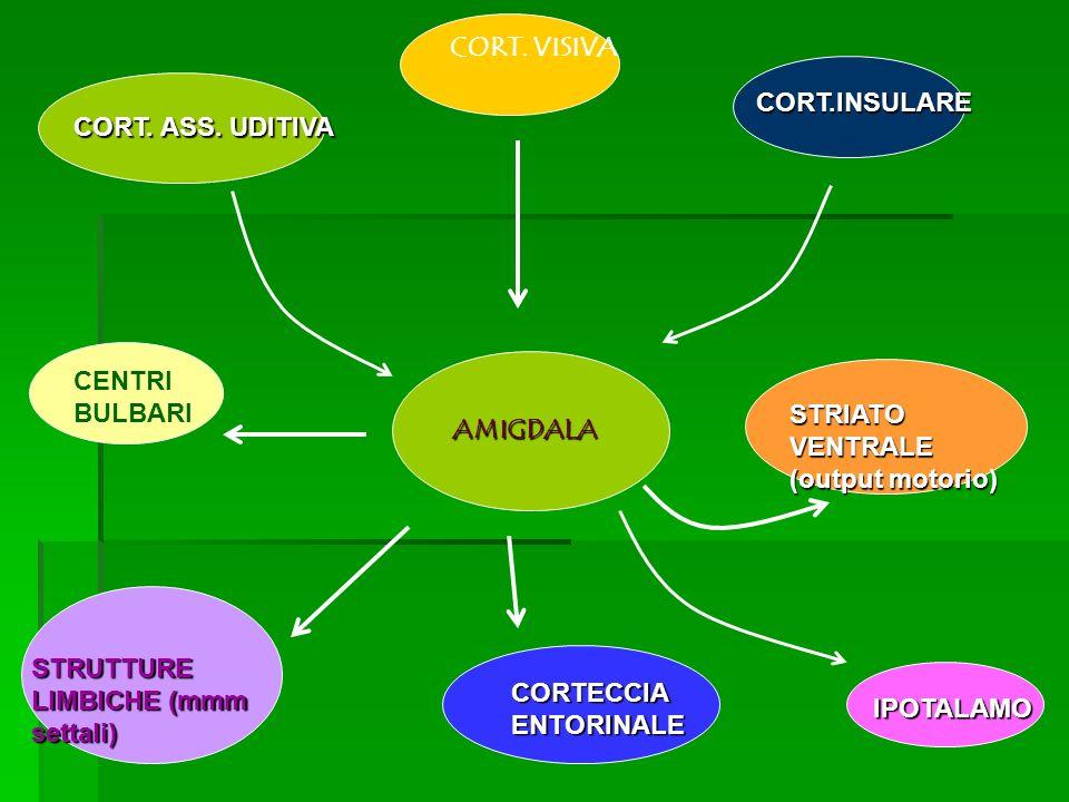 AMIGDALA CORT. ASS. UDITIVA CORT. VISIVA CORT.INSULARE STRIATO VENTRALE (output motorio) IPOTALAMO CORTECCIA ENTORINALE STRUTTURE LIMBICHE (mmm settal