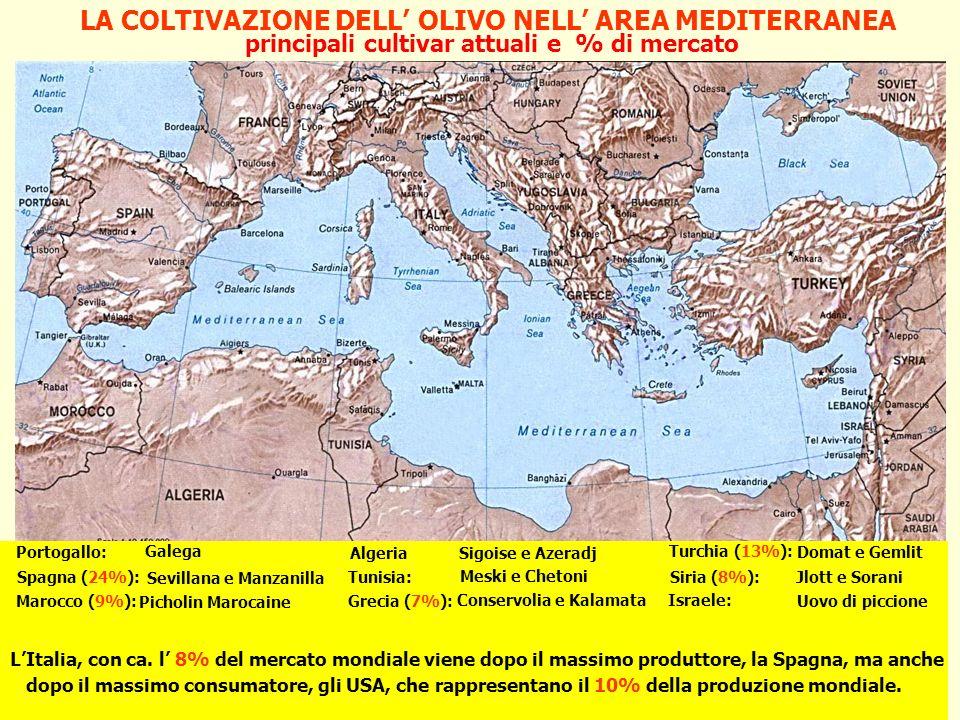 Cdl in Scienze dell enogastronomia mediterranea e salute OLIVE DA MENSA principali cultivar italiane AscolanaMarche: IntossoAbbruzzo: ItranaLazio: Bella di Cerignola, S.