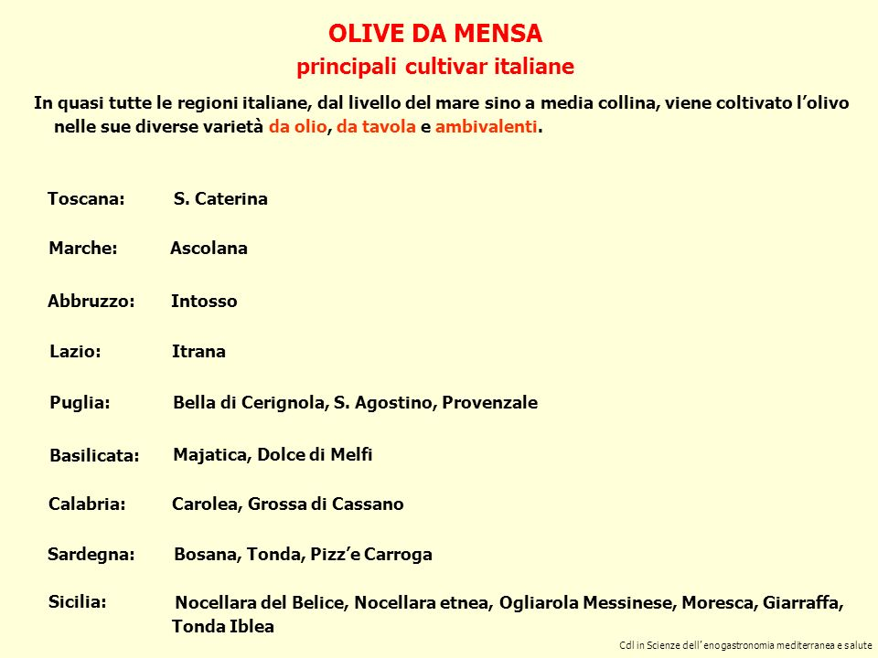 Cdl in Scienze dell enogastronomia mediterranea e Salute OLIVE DA MENSA lolivicoltura siciliana Tra le regioni italiane, la Sicilia è il maggiore produttore di olive da mensa, con un totale di ca.