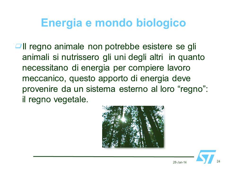28-Jan-14 24 Energia e mondo biologico Il regno animale non potrebbe esistere se gli animali si nutrissero gli uni degli altri in quanto necessitano d