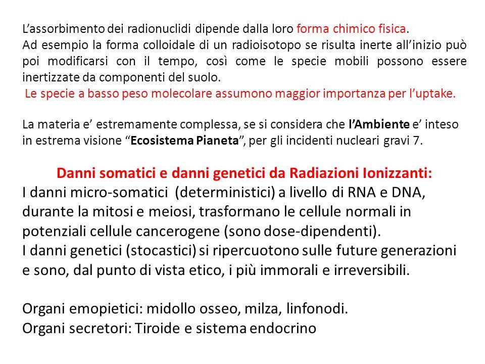 Lassorbimento dei radionuclidi dipende dalla loro forma chimico fisica.
