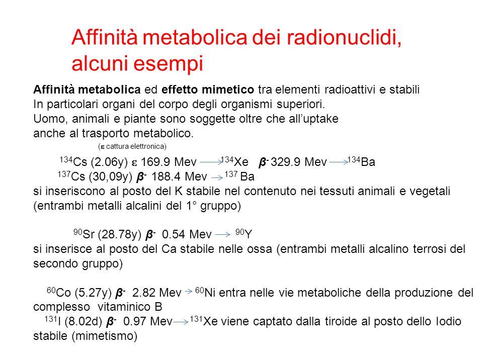 Affinità metabolica dei radionuclidi, alcuni esempi Affinità metabolica ed effetto mimetico tra elementi radioattivi e stabili In particolari organi del corpo degli organismi superiori.