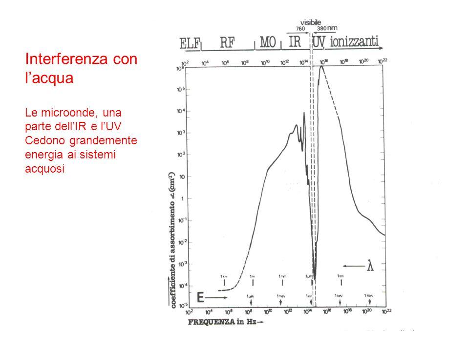 Interferenza con lacqua Le microonde, una parte dellIR e lUV Cedono grandemente energia ai sistemi acquosi