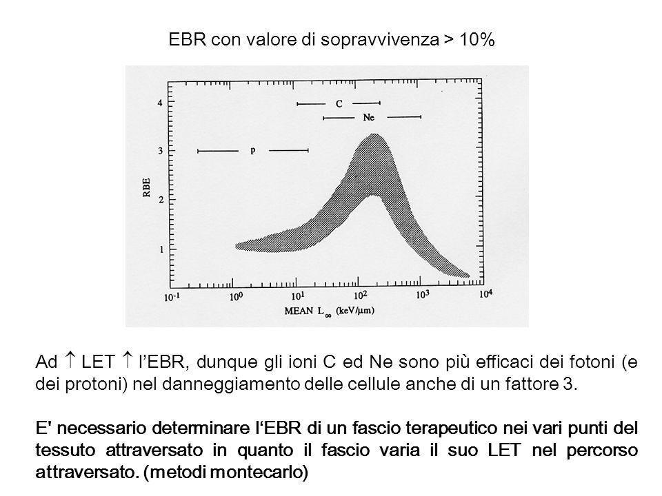 EBR con valore di sopravvivenza > 10% Ad LET lEBR, dunque gli ioni C ed Ne sono più efficaci dei fotoni (e dei protoni) nel danneggiamento delle cellu