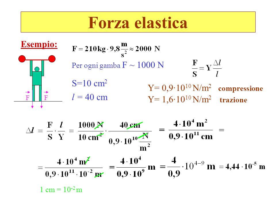 Forza elastica Per ogni gamba F ~ 1000 N Esempio: S=10 cm 2 l = 40 cm Y= 0,9·10 10 N/m 2 compressione Y= 1,6·10 10 N/m 2 trazione = 1 cm = 10 -2 m FF
