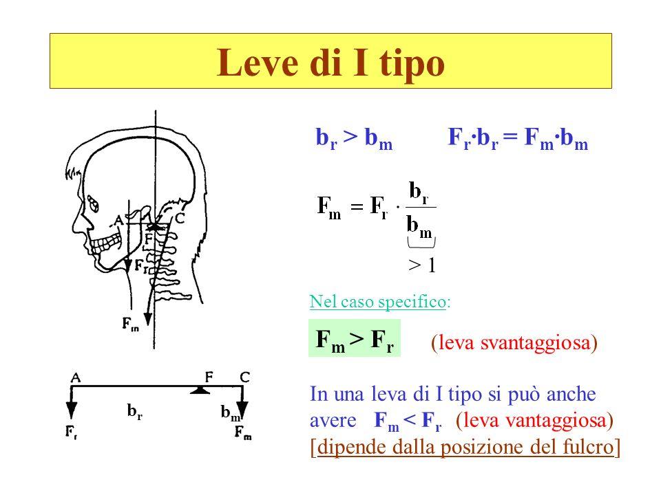 Leve di I tipo brbr bmbm b r > b m F r ·b r = F m ·b m > 1 F m > F r (leva svantaggiosa) In una leva di I tipo si può anche avere F m < F r (leva vant