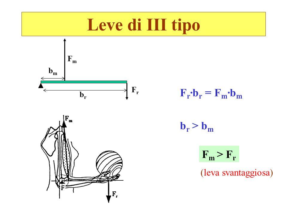 Leve di III tipo bmbm FrFr brbr FmFm F r ·b r = F m ·b m b r > b m F m > F r (leva svantaggiosa)