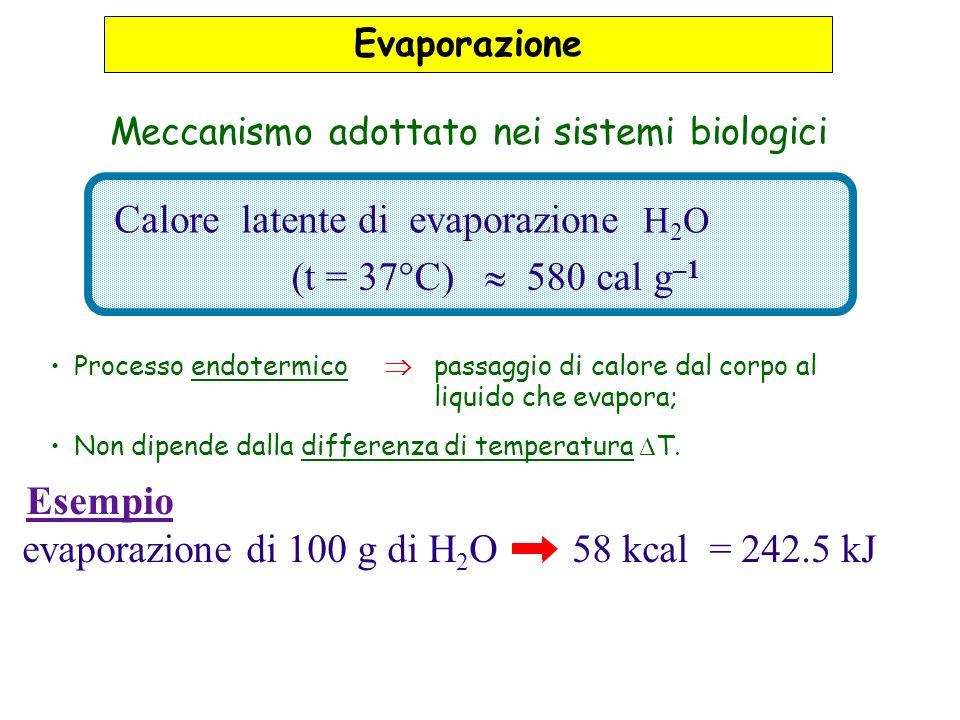 Calore latente di evaporazione H 2 O (t = 37°C) 580 cal g –1 evaporazione di 100 g di H 2 O 58 kcal = 242.5 kJ Esempio Evaporazione Meccanismo adottato nei sistemi biologici Processo endotermico passaggio di calore dal corpo al liquido che evapora; Non dipende dalla differenza di temperatura T.