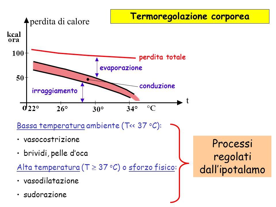 o 22° 26° 30° 34° 50 100 kcal ora perdita di calore perdita totale evaporazione conduzione irraggiamento t °C Bassa temperatura ambiente (T<< 37 o C): vasocostrizione brividi, pelle doca Alta temperatura (T 37 o C) o sforzo fisico: vasodilatazione sudorazione Processi regolati dallipotalamo Termoregolazione corporea
