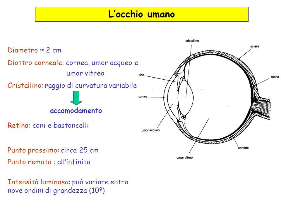 Locchio umano Diametro 2 cm Diottro corneale: cornea, umor acqueo e umor vitreo Cristallino: raggio di curvatura variabile accomodamento Retina: coni