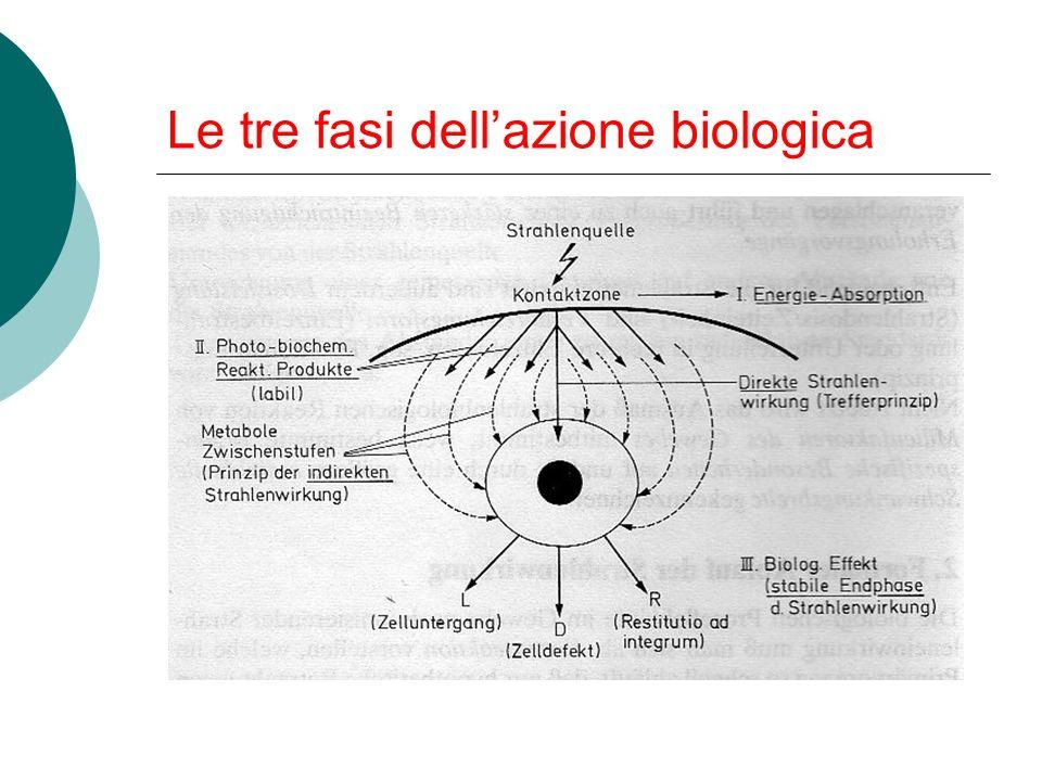 Le tre fasi dellazione biologica