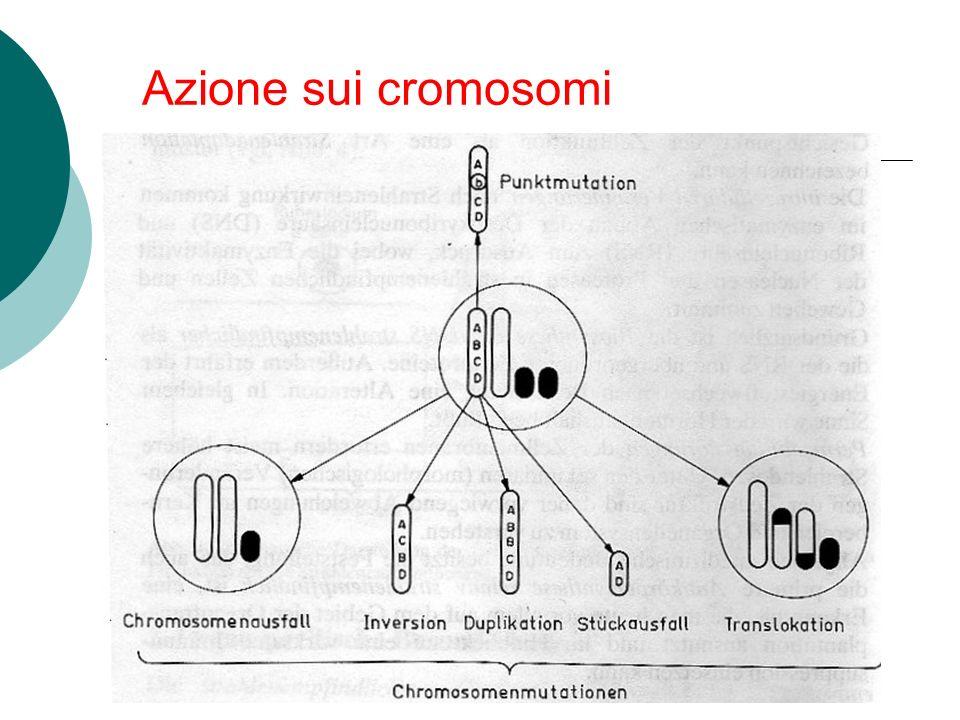 Azione sui cromosomi