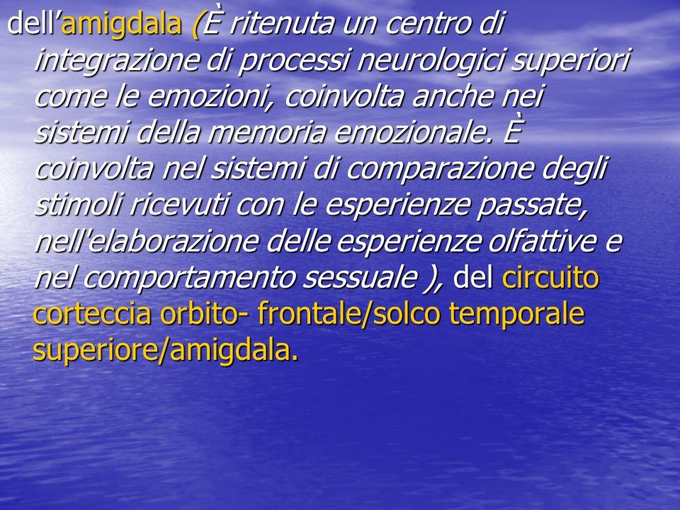 dellamigdala (È ritenuta un centro di integrazione di processi neurologici superiori come le emozioni, coinvolta anche nei sistemi della memoria emozi