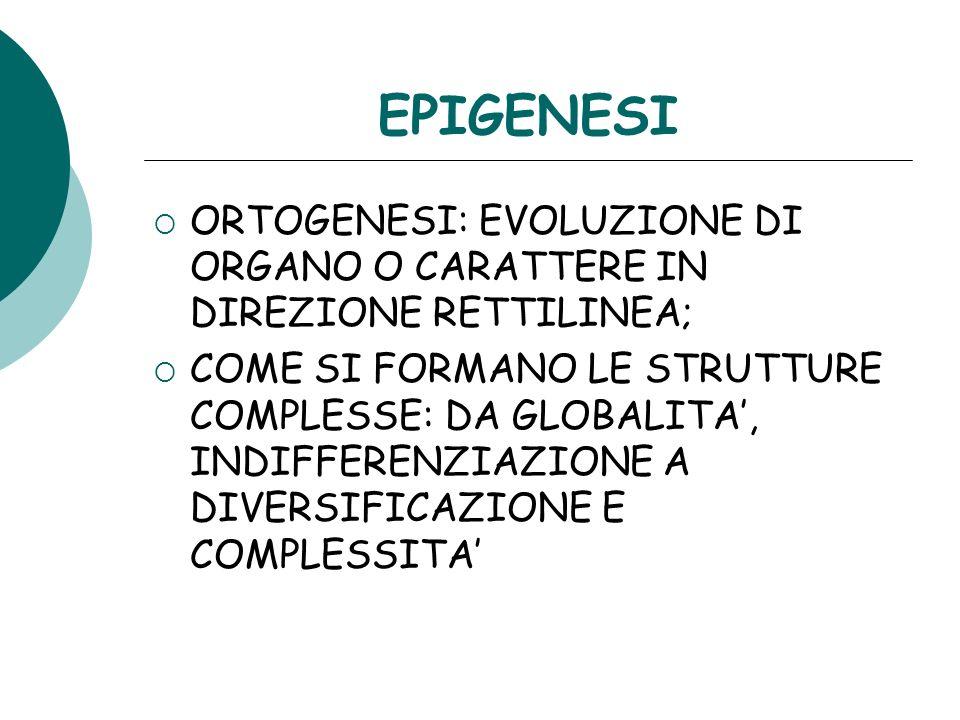 EPIGENESI ORTOGENESI: EVOLUZIONE DI ORGANO O CARATTERE IN DIREZIONE RETTILINEA; COME SI FORMANO LE STRUTTURE COMPLESSE: DA GLOBALITA, INDIFFERENZIAZIO