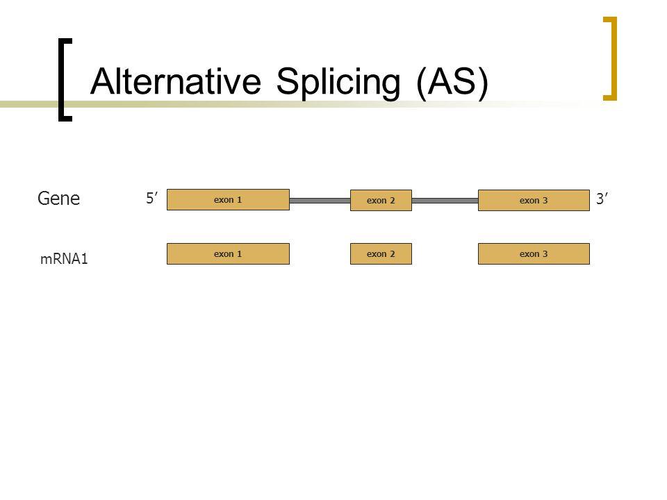 Alternative Splicing (AS) 5 3 exon 2exon 3 Gene mRNA1 exon 2exon 3 exon 1