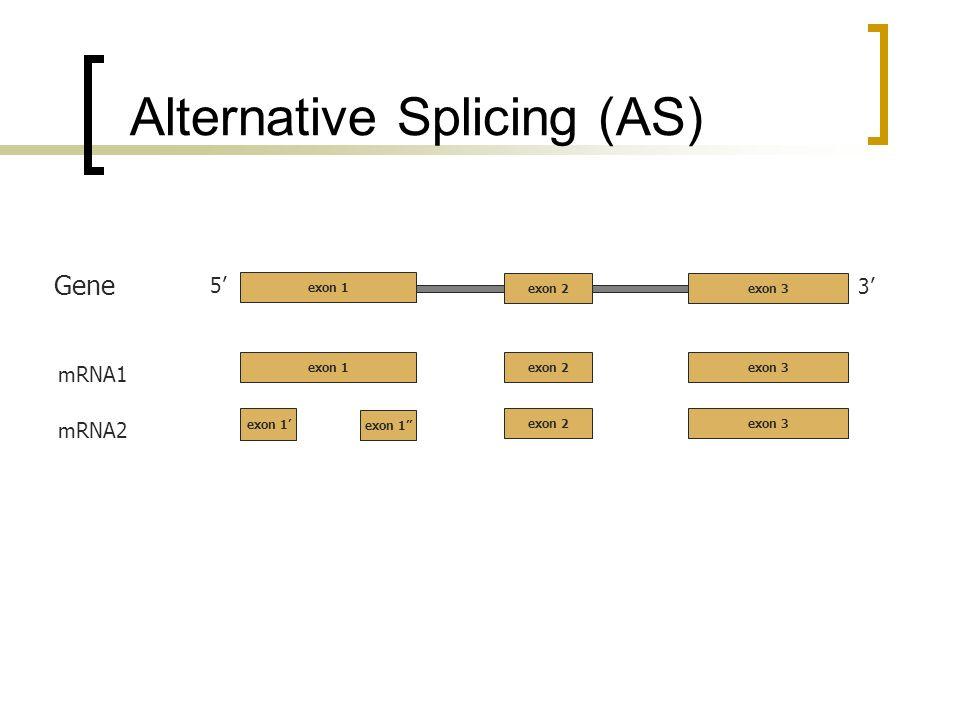 Alternative Splicing (AS) 5 3 exon 2exon 3 Gene mRNA1 exon 2exon 3 exon 1 mRNA2 exon 2exon 3 exon 1