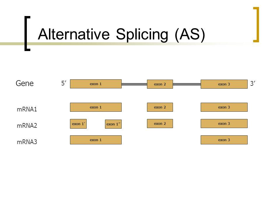 Alternative Splicing (AS) 5 3 exon 2exon 3 Gene mRNA1 exon 2exon 3 exon 1 mRNA2 exon 2exon 3 exon 1 mRNA3 exon 3exon 1