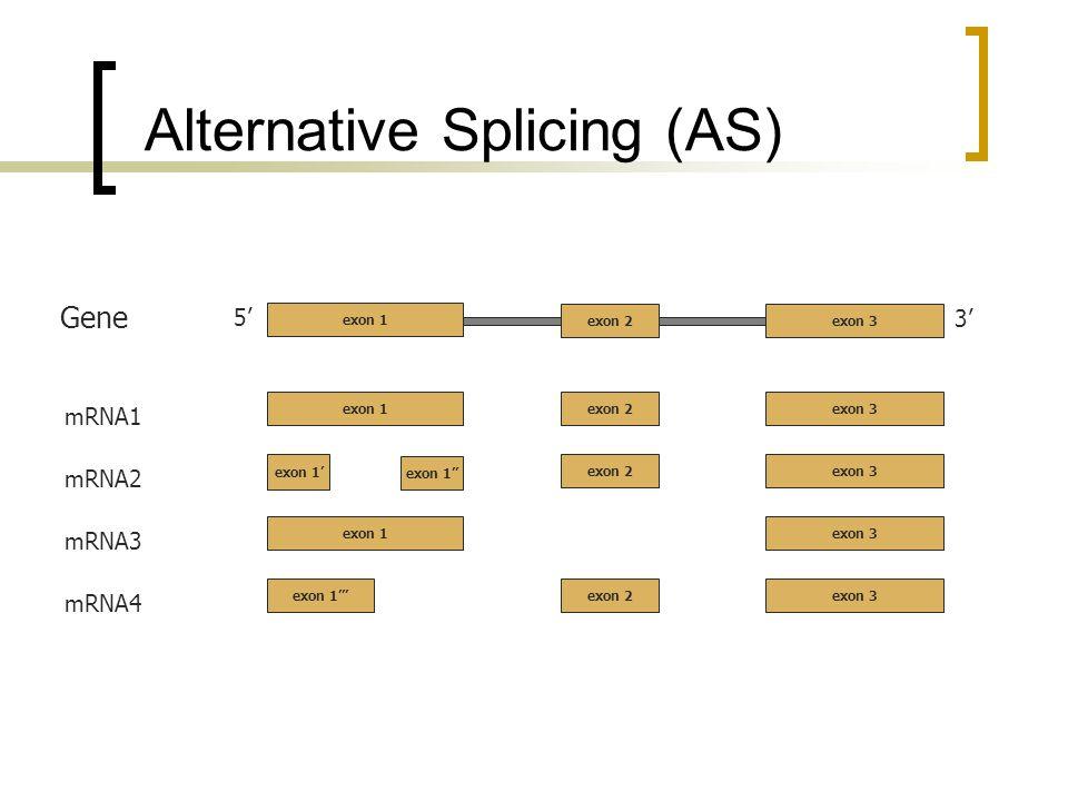 Alternative Splicing (AS) 5 3 exon 2exon 3 Gene mRNA1 exon 2exon 3 exon 1 mRNA2 exon 2exon 3 exon 1 mRNA3 exon 3exon 1 mRNA4 exon 2exon 3exon 1