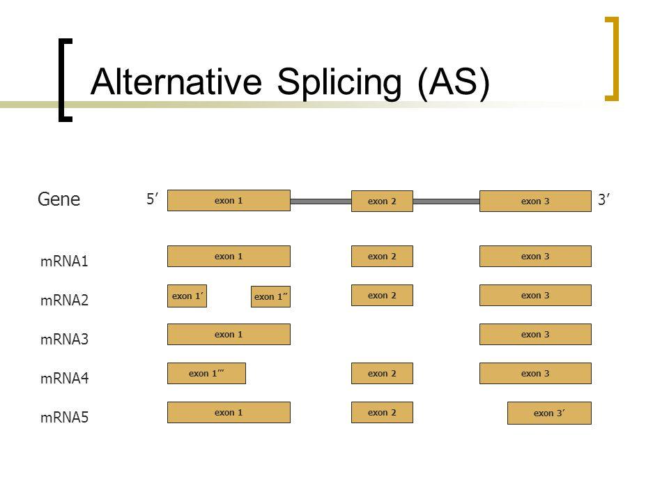 Alternative Splicing (AS) 5 3 exon 2exon 3 Gene mRNA1 exon 2exon 3 exon 1 mRNA2 exon 2exon 3 exon 1 mRNA3 exon 3exon 1 mRNA4 exon 2exon 3exon 1 mRNA5