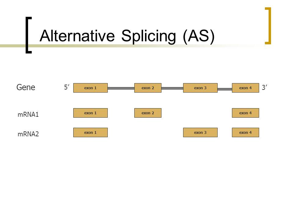 Alternative Splicing (AS) 5 3 Gene mRNA1 exon 1 mRNA2 exon 2exon 3exon 4 exon 1exon 2exon 4 exon 1exon 3exon 4