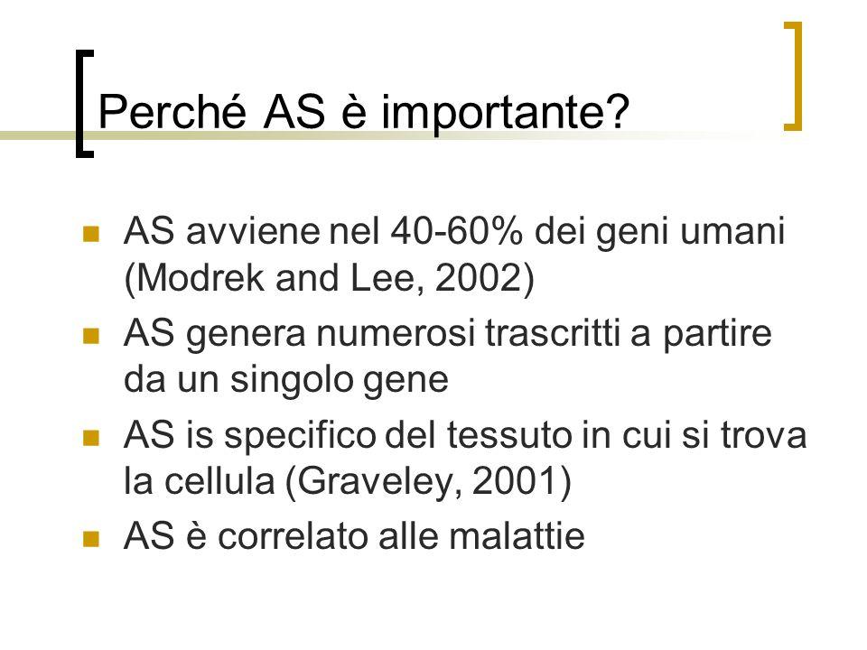 Perché AS è importante? AS avviene nel 40-60% dei geni umani (Modrek and Lee, 2002) AS genera numerosi trascritti a partire da un singolo gene AS is s