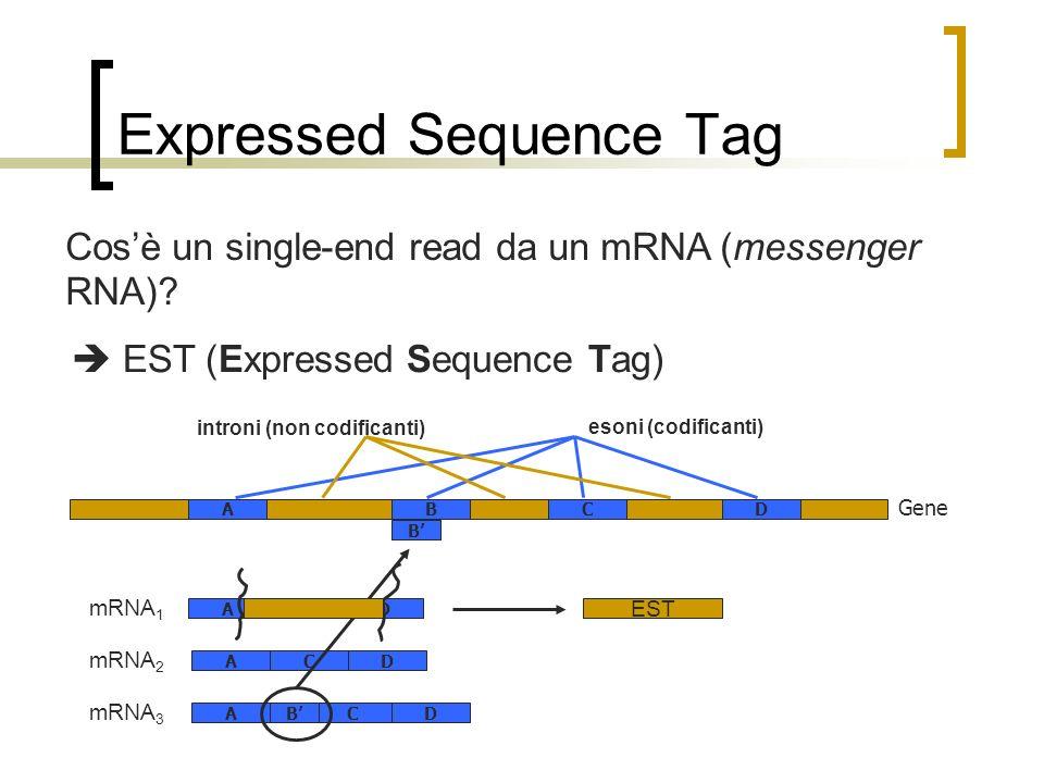 Expressed Sequence Tag Cosè un single-end read da un mRNA (messenger RNA)? EST (Expressed Sequence Tag) Gene CDAB esoni (codificanti) introni (non cod