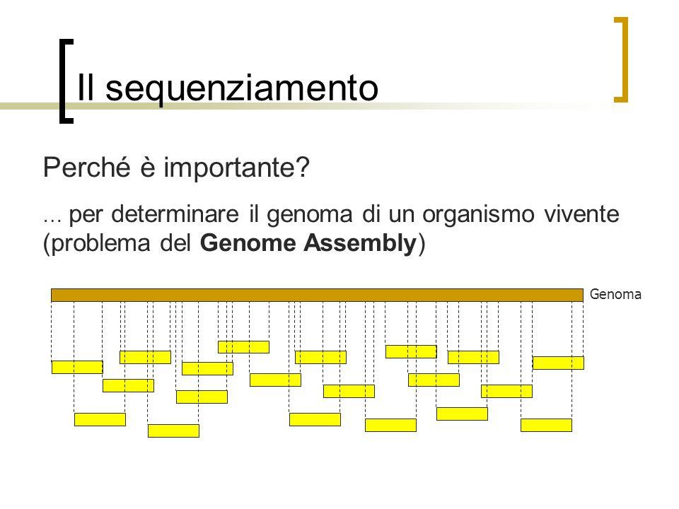 Il sequenziamento Perché è importante? … per determinare il genoma di un organismo vivente (problema del Genome Assembly) Genoma
