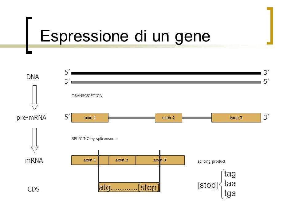 Pattern di un introne GT AG Introni canonici: 99.24 % Introni non canonici: GCAG 0.05 % 0.69 % 0.02 % ATAC ALTRO Burset et al., Nucleic Acids Res.