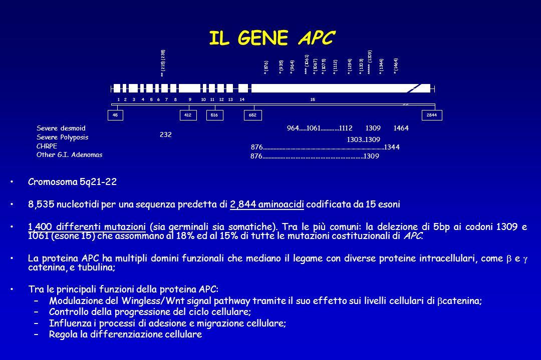 Cromosoma 5q21-22 8,535 nucleotidi per una sequenza predetta di 2,844 aminoacidi codificata da 15 esoni 1,400 differenti mutazioni (sia germinali sia