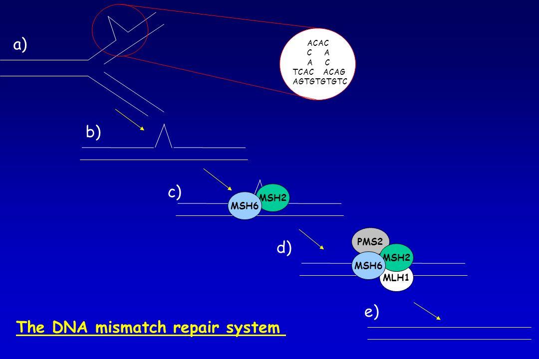 ACAC C A A C TCAC ACAG AGTGTGTGTC MSH2 MSH6 MLH1 PMS2 MSH2 MSH6 a) b) c) d) e) The DNA mismatch repair system