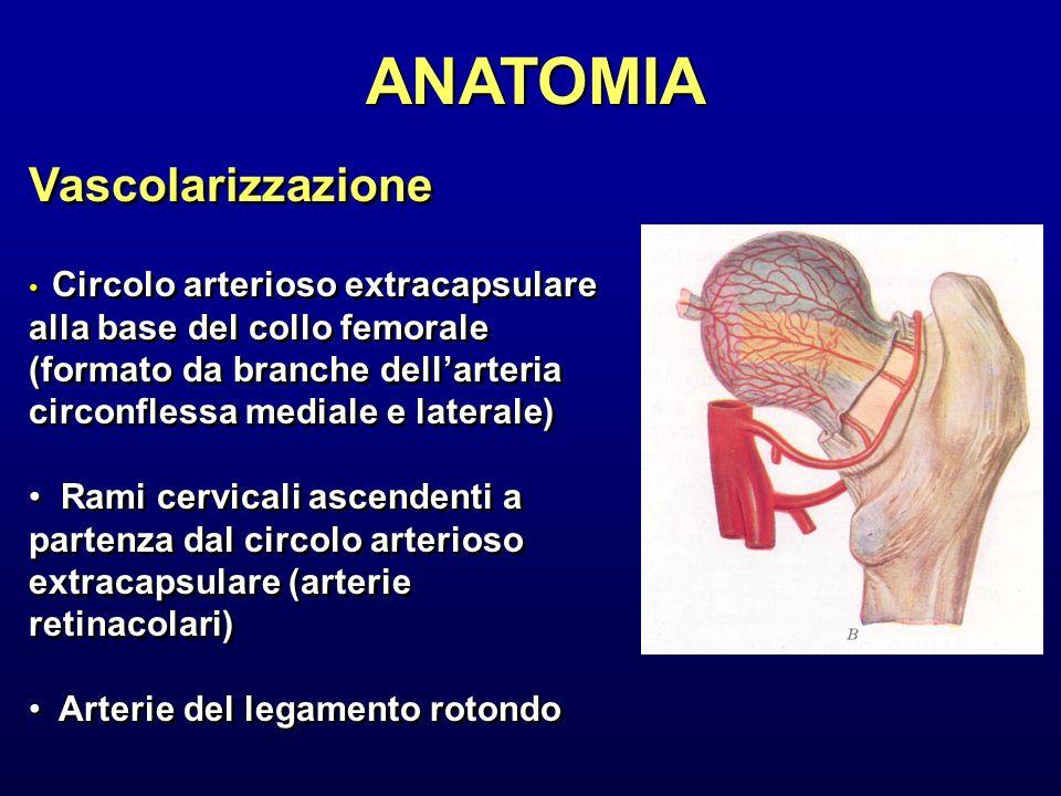 ANATOMIA Vascolarizzazione Circolo arterioso extracapsulare alla base del collo femorale (formato da branche dellarteria circonflessa mediale e latera