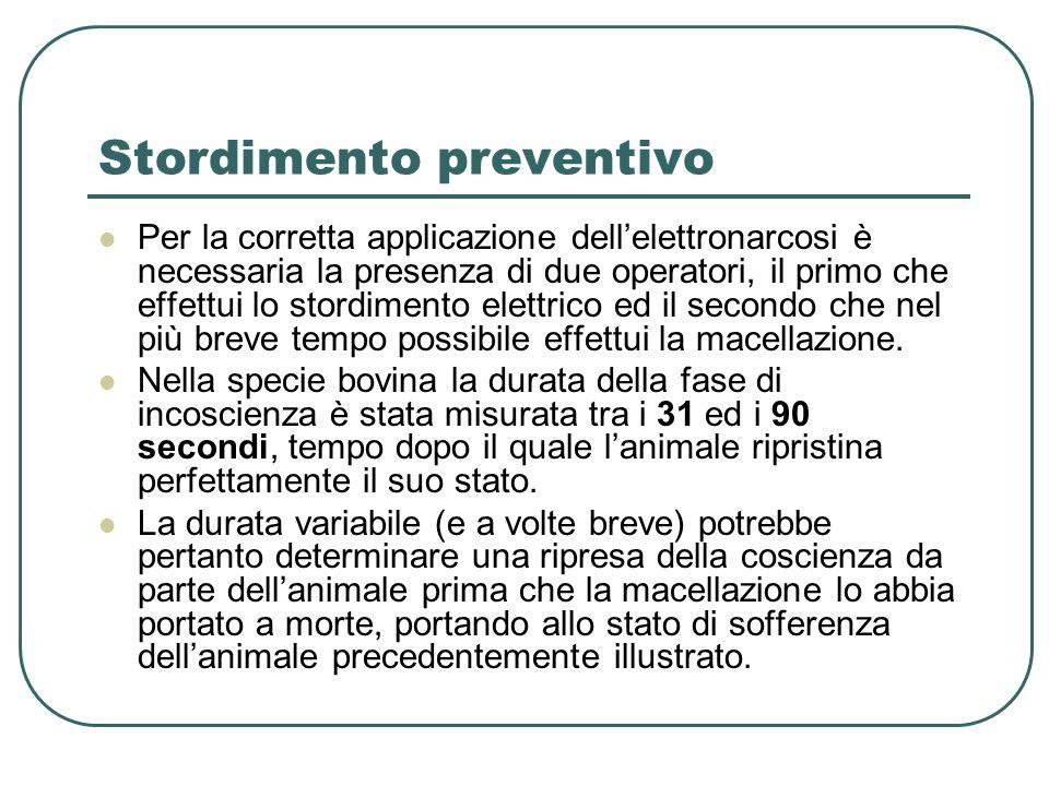 Stordimento preventivo Per la corretta applicazione dellelettronarcosi è necessaria la presenza di due operatori, il primo che effettui lo stordimento elettrico ed il secondo che nel più breve tempo possibile effettui la macellazione.