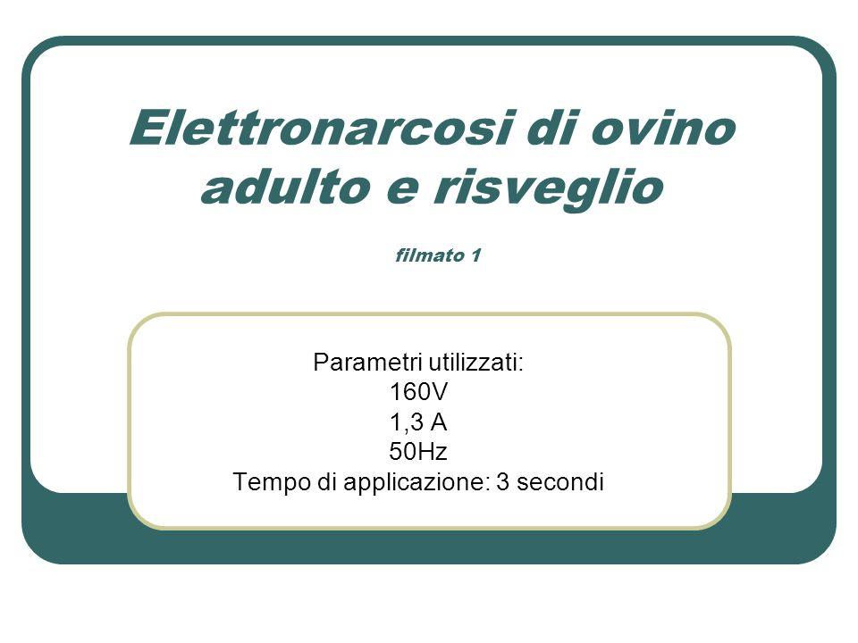 Elettronarcosi di ovino adulto e risveglio filmato 1 Parametri utilizzati: 160V 1,3 A 50Hz Tempo di applicazione: 3 secondi