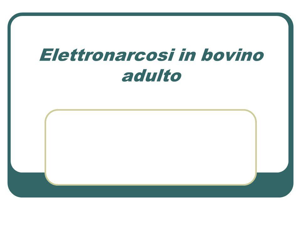 Elettronarcosi in bovino adulto