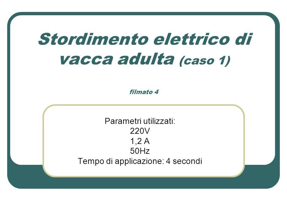 Stordimento elettrico di vacca adulta (caso 1) filmato 4 Parametri utilizzati: 220V 1,2 A 50Hz Tempo di applicazione: 4 secondi