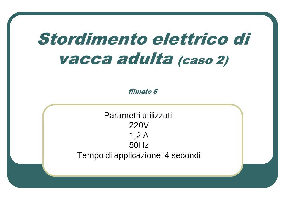 Stordimento elettrico di vacca adulta (caso 2) filmato 5 Parametri utilizzati: 220V 1,2 A 50Hz Tempo di applicazione: 4 secondi