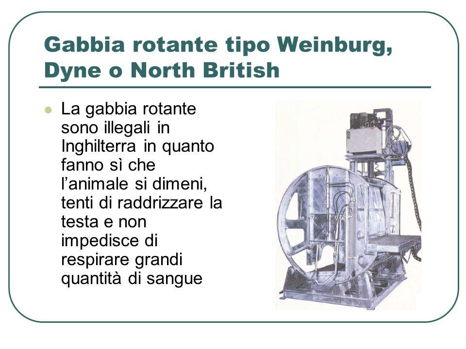 Gabbia rotante tipo Weinburg, Dyne o North British La gabbia rotante sono illegali in Inghilterra in quanto fanno sì che lanimale si dimeni, tenti di raddrizzare la testa e non impedisce di respirare grandi quantità di sangue