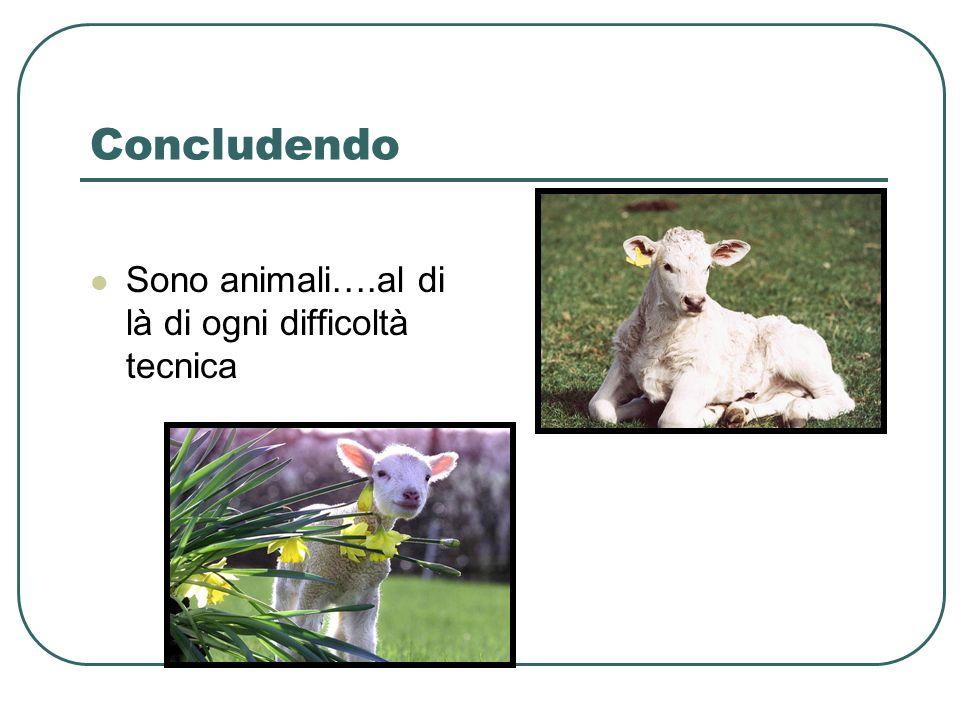 Concludendo Sono animali….al di là di ogni difficoltà tecnica