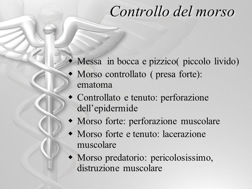 Controllo del morso Messa in bocca e pizzico( piccolo livido) Morso controllato ( presa forte): ematoma Controllato e tenuto: perforazione dellepiderm